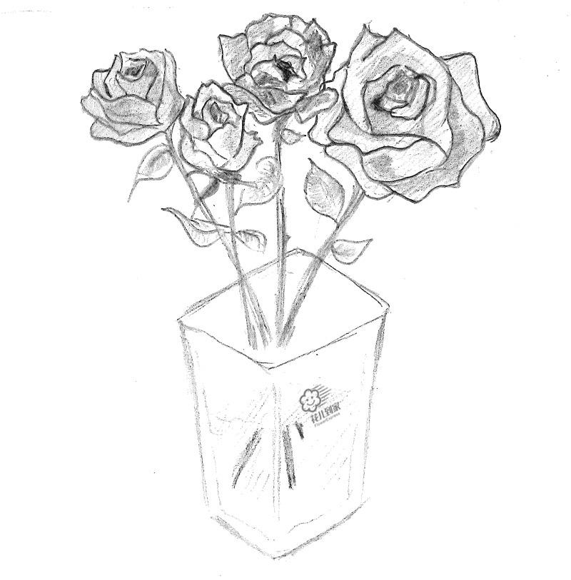 玫瑰花束简笔画步骤
